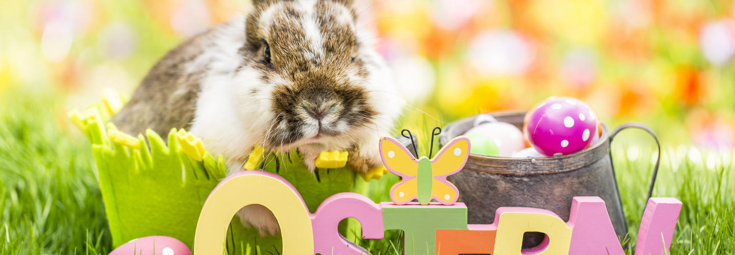 Ostern Hase Osterhase Ostereier Osternest Fruehling Fotolia 142205529 Subscription Monthly M